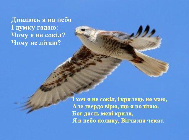 Дивлюсь я на небо І думку гадаю: Чому я не сокіл? Чому не літаю?