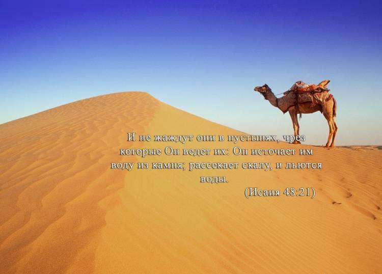 песок, пустыня