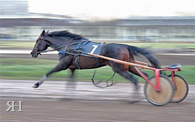 конь бежит